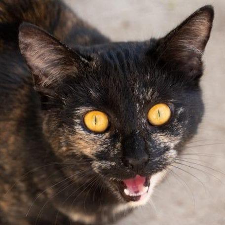 Rufina