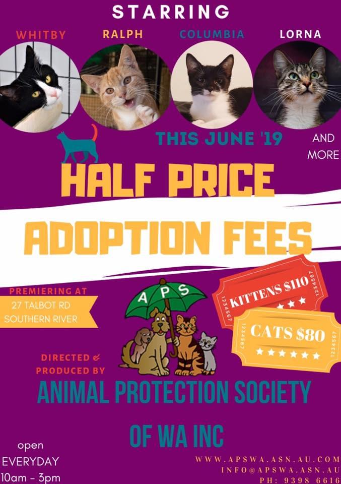 Half Price Cat Adoption